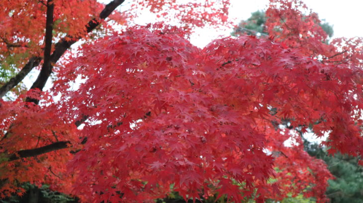 伊丹市内で紅葉が見られるスポットまとめ
