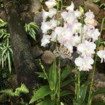 伊丹市昆虫館が特別映像を期間限定で公開中!