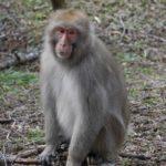 【注意】西野で猿の目撃情報があったらしい